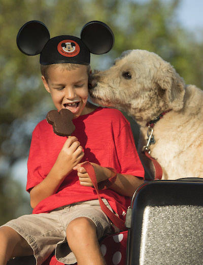 Dogs at Disney?